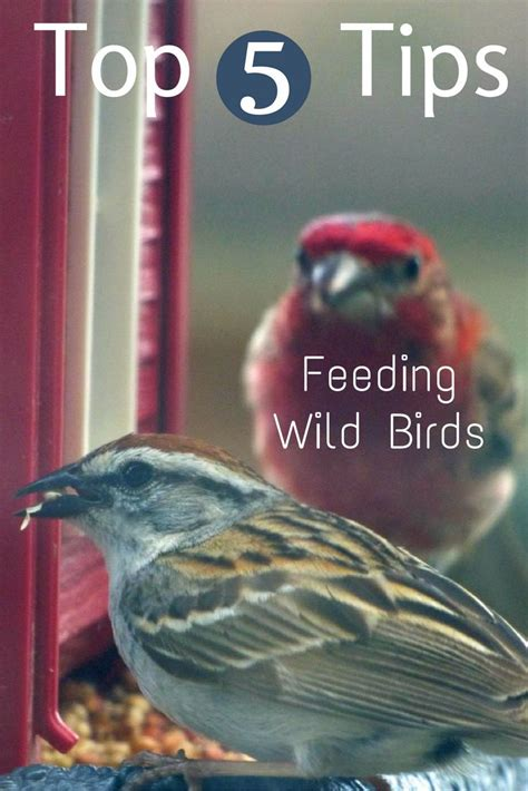backyard bird feeding tips 17 best images about top of the crop on pinterest