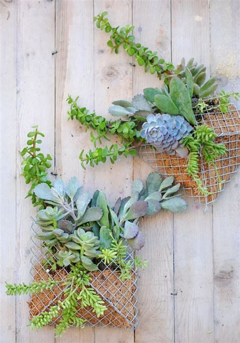 Small Wall Planter by Diy Small Succulent Wall Planter 1001 Gardens