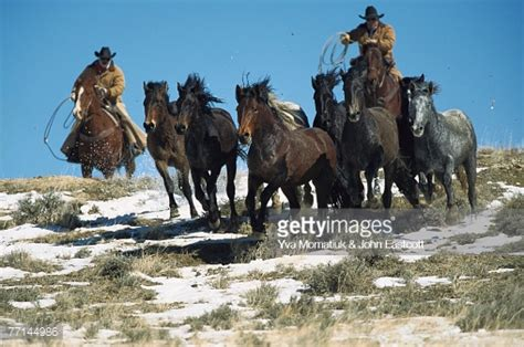 bureau of land management mustang adoption mustang bureau of land management wranglers up