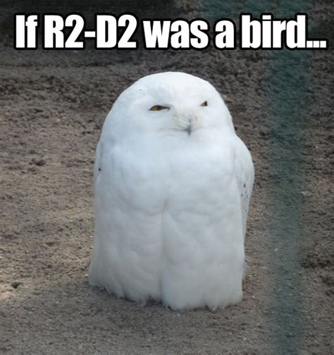 White Owl Meme - if r2 d2 was a bird the meta picture
