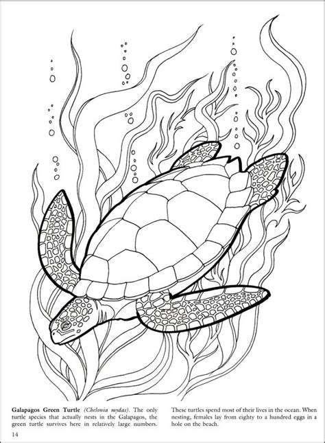coral reef pencil art coloring pages