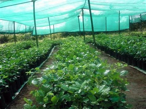 shade net house design manufacturer of green house constructions polyhouse constructions by gm greenhouses