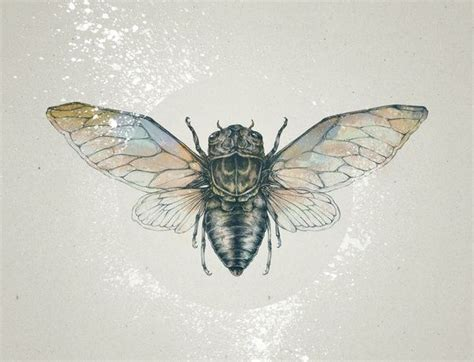 cicada tattoo cicada print by white
