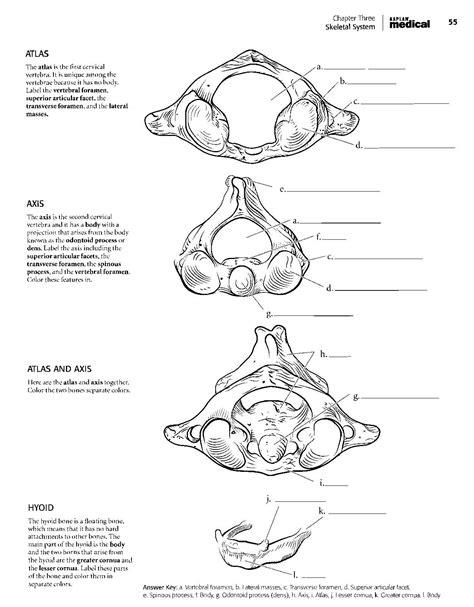 position coloring book pdf kaplan anatomy coloring book pdf boudli anatomy