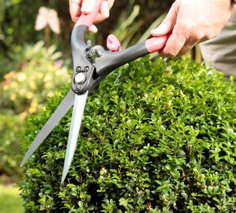 wann umpflanzen buchsbaum schneiden wann buchsbaum schneiden wann bild