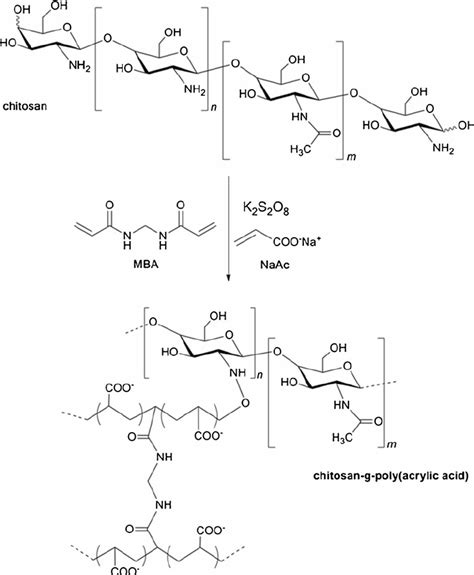 Mba In Chemical by Fig 1 Schematic Chemical Graft Reaction Of Paa Onto Cts