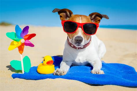 Puppy S At Home by Can Dogs And Cats Get Sunburn Prevention Tips