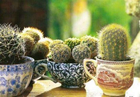 elenco fiori autunnali piante grasse da appartamento idee green