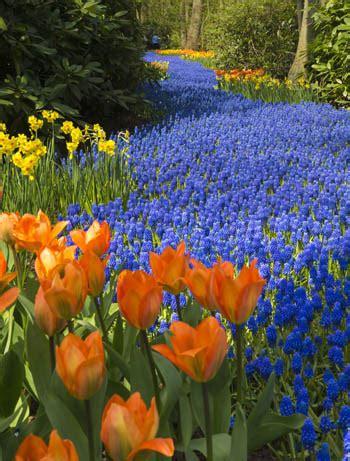 ci di fiori in olanda weekend speciale tra i fiori in olanda dal 24 marzo al