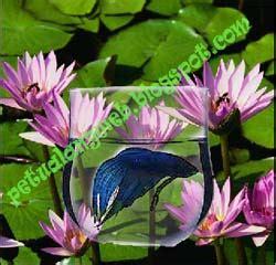 cara edit foto tembus pandang photoshop cs3 cara edit foto dan membuat efek transparan tembus pandang