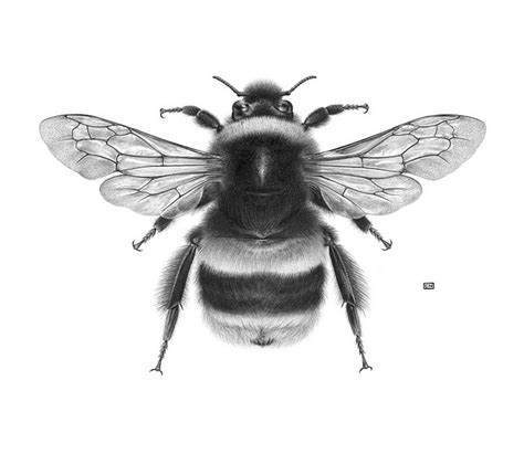 realistic uncolored sitting bee tattoo design