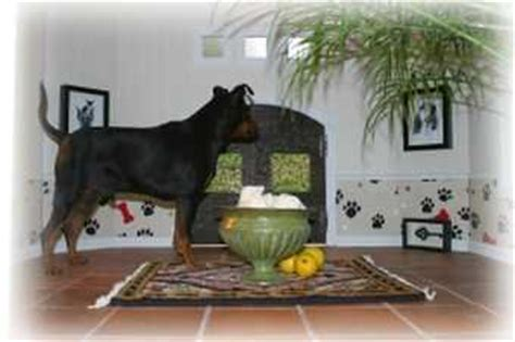 dog house in spanish custom dog houses luxury dog houses the last word in posh dog houses