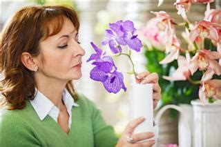care of orchids after flowering useful tips for care and maintenance of phalaenopsis orchids