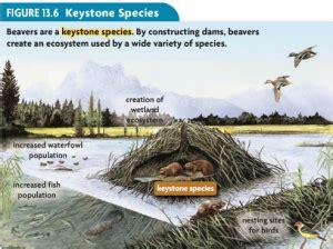 keystone species exles www pixshark com images