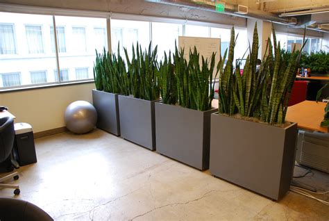 plant partition everything grows living office dividers