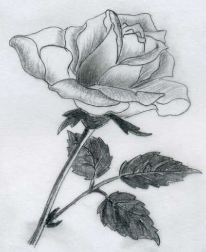 Drawing Roses by Various Drawings