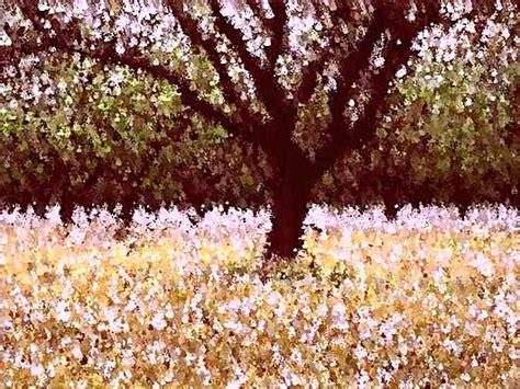 alberi in fiore alberi in fiore