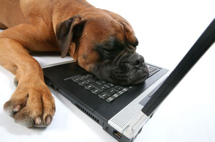 bored puppy creating exciting hotel websites for guests and seo new media travel