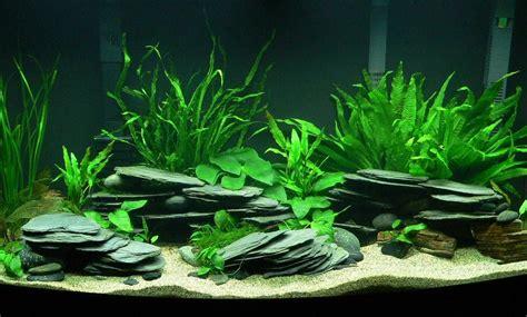 aquarium design using slate diy stacked slate caves petdiys com aquarium