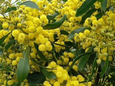arbusti da fiore sempreverdi sempreverdi piante da giardino piante sempreverdi
