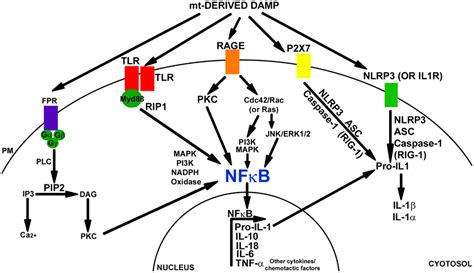 pattern recognition dopamine frontiers bioenergetic dysfunction and inflammation in