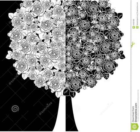 imagenes de flores blancas y negras 193 rbol con las flores blancas y negras foto de archivo