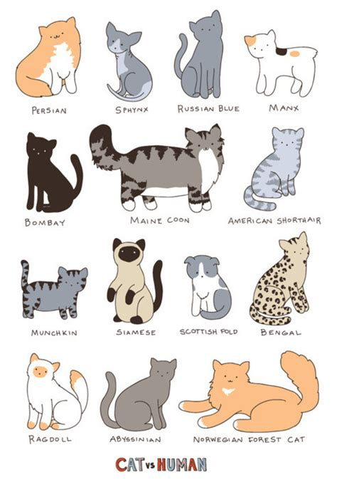 types of cats pictures
