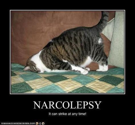 Sleeping Cat Meme - narcolepsy meme slapcaption com narcolepsy pinterest
