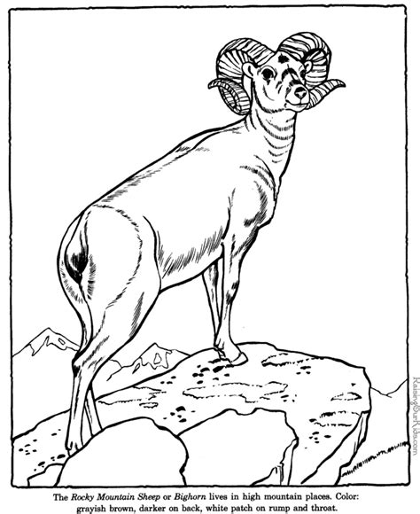 bighorn sheep coloring pages big horn sheep coloring pages zoo animals