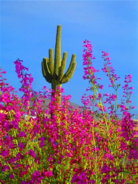 az color gorgeous colors arizona western tucson