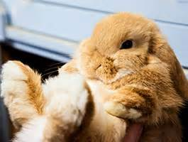 Cheney Manor Garden Centre by Paradise Pets Rabbits Wiltshire