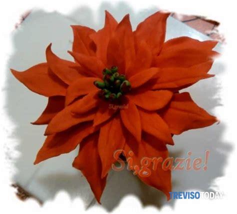 corsi fiori corso fiori la stella di natale eventi a treviso