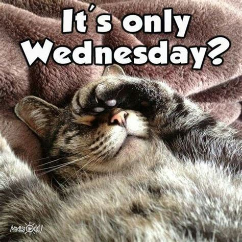 wednesday meme wednesday memes happy wednesday images