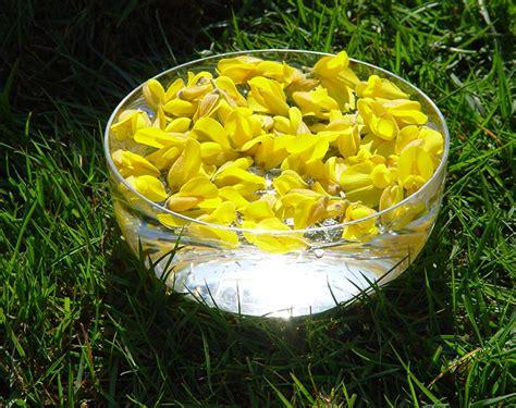 come si preparano i fiori di bach come si preparano i fiori di bach e come funzionano