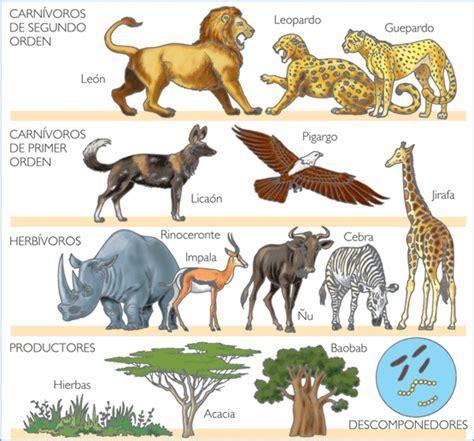 cadena alimenticia que son los consumidores biodiversidad en ecosistmas acu 225 ticos y terrestres