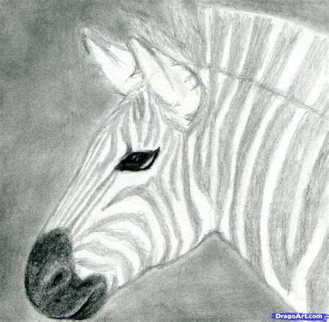 how to draw a realistic step by step drawing realistic animals step by step pencil drawing