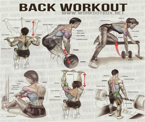exercise fitness exercises back workouts back workout