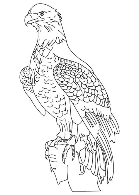 mexican eagle coloring page mexican eagle drawing coloring pages