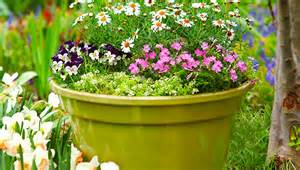 Lowes Garden Containers - 12 container garden combos