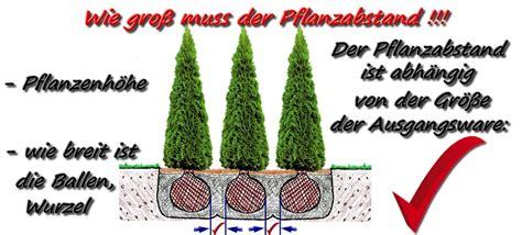 hecke pflanzen abstand 3280 hecke pflanzen abstand thuja pflanze lebensbaum hecke