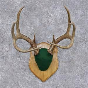 Deer antler taxidermy plaque mount m1 12447 for sale the taxidermy