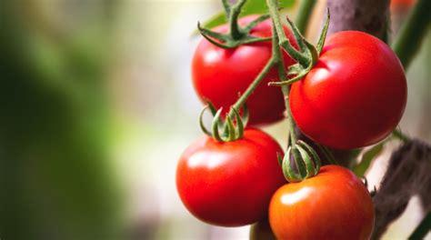 alimenti senza fibre alimenti senza scorie la lista di prodotti