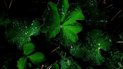 wallpaper green full hd green flower after rain hd wallpapers hd wallpapers