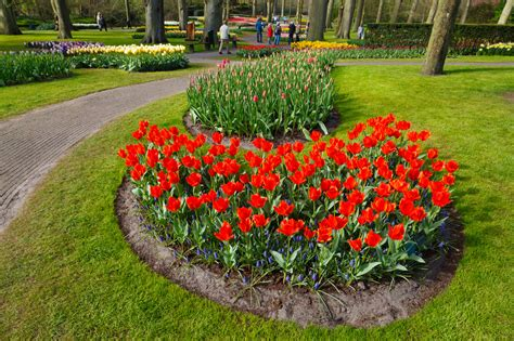 Keukenhof Flower Gardens Keukenhof Flower Garden Free Stock Photo Domain Pictures