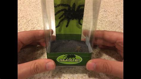 tarantula hut  petco youtube