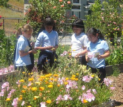 friends of master gardeners of santa clara county stage 15 best ideas about community gardening on pinterest