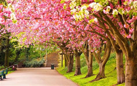 spring landscaping beautiful beautiful spring landscape wallpapers spring