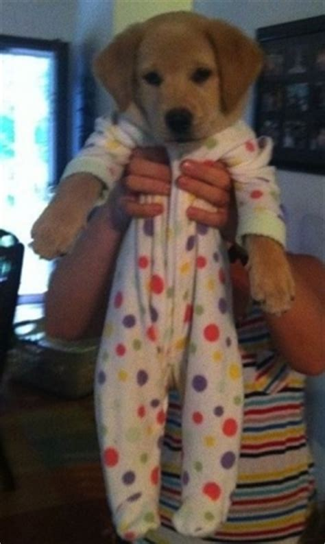 Unicorn Pajamas Nv By Goshopper 5 ways my puppy reminds me of a toddler daily