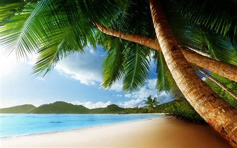 tropical palm trees beach ocean trees wallpaper
