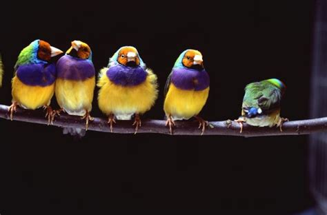 espectaculares imagenes de las flores mas lindas del mundo aves al abrigo de plumas y mudas el blog de las mascotas